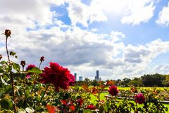 Flowers growing in beautiful park stock images