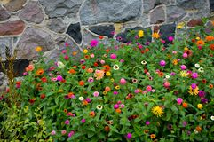 Flowers Growing in Front of Stone Wall stock photos