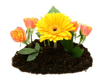 Flowers growing from the ground Royalty Free Stock Image
