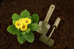 Flowers growing, hoe and spade Royalty Free Stock Photos