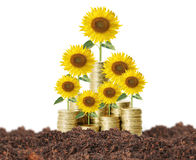 Flowers growing from money Royalty Free Stock Photos