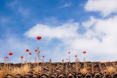 Flowers Growing In Rooftop. Orange flowers growing in rooftop tiles against blue sky Royalty Free Stock Images