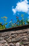 Flowers growing on the stone fence against the sky royalty free stock photography