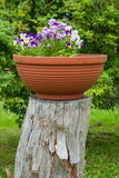 Flowers growing on the stump. Flowers growing in a vase on the stump Royalty Free Stock Image