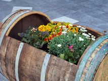 Flowers Growing in Wine Barrel Stock Photo