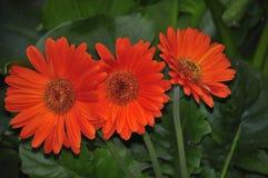 Flowers grown in nurseries Stock Photo