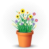 Flowers grows in flowerpot on transparent. Flowerpot with flowers plant and grass on white transparent background. Nature spring or summer abstract flora Royalty Free Stock Image