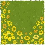 Flowers on a grunge background. Yellow and orange flowers on a grunge background Royalty Free Stock Photo