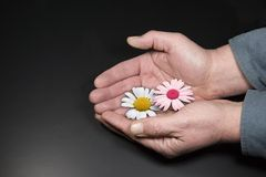 Flowers in Hand Royalty Free Stock Image