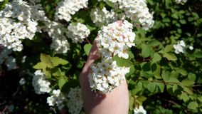 Flowers in a hand Royalty Free Stock Photography