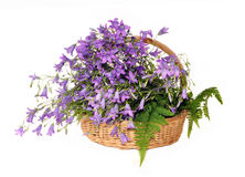 Flowers hand bells  in a basket on fern leaves Stock Image