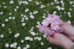 Flowers in hand Royalty Free Stock Images