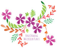 Flowers hand drawing painted Royalty Free Stock Images