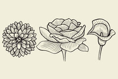 Flowers - hand drawn collection Stock Images