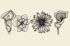 Flowers - hand drawn collection Stock Photography