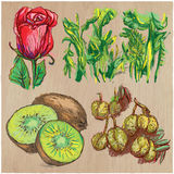 Flowers - An hand drawn colored vector pack. Line art. Stock Image