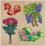Flowers - An hand drawn colored vector pack. Line art. Royalty Free Stock Photos