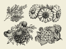 Flowers. Hand drawn sketch of chamomile, mimosa, hortensia, dahlia. Vector illustration Stock Images