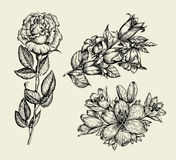 Flowers. Hand drawn sketch flower bell, rose, lily, floral pattern. Vector illustration Stock Photos