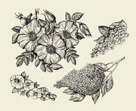 Flowers. Hand drawn sketch flower, lilac, dogrose, rosehip, wild rose. Vector illustration Royalty Free Stock Photos