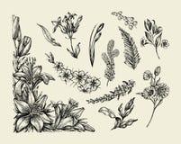 Flowers. Hand drawn sketch flower, lily, fern, grass, herb, bracken, lilia. Vector illustration Royalty Free Stock Photography