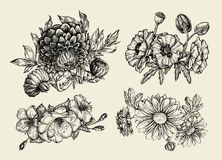 Flowers. Hand drawn sketch flower, poppy, chrysanthemum, dahlia. Vector illustration Stock Image