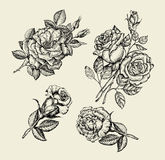 Flowers. Hand drawn sketch flower, rose, dogrose, rosehip, floral pattern. Vector illustration Royalty Free Stock Images