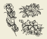 Flowers. Hand drawn sketch flower, rose, floral pattern. Vector illustration Royalty Free Stock Images