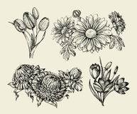 Flowers. Hand drawn sketch flower, tulip, astra, aster, crocus, chrysanthemum. Vector illustration Royalty Free Stock Image