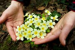 Flowers in hand. Flowers in the hands Royalty Free Stock Photography