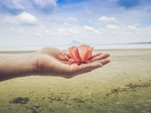 Flowers on hand The sea is blue and the beach is beautiful. Island, sand and sea, green trees with beautiful blue sea and beautiful sandy beach Stock Images