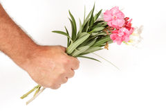 Flowers in Hand. Simple Romance. Romance flowers in hand. Pink and white flowers on a white background Stock Images