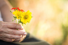 Flowers in the hands of the elderly woman Royalty Free Stock Photography