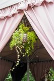Flowers hanging in flowerpots, horizontal frame. Flowers suspended in flowerpots in summer on the street, horizontal frame stock images