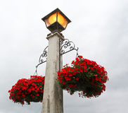 Flowers hanging from a lampost Royalty Free Stock Photo
