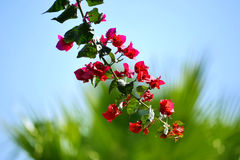 Flowers hanging off a tree on a bright sunny day. Royalty Free Stock Photos
