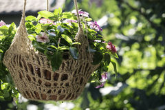 Flowers hanging pot Royalty Free Stock Images