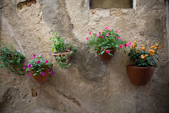 Flowers hangs on wall. Of a home stock image
