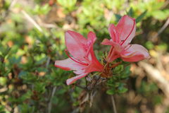 Flowers. Are have carpel sticking out see beautiful Royalty Free Stock Photography