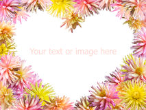 Flowers heart. Pink-yellow Dahlia flowers set mould heart shape frame (isolated on white, 4 to 3 side proportions Royalty Free Stock Photo