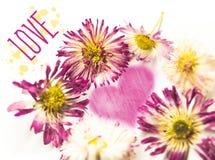 Flowers, heart, inscription love - on white background stock photos