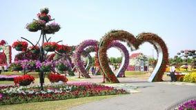 Flowers heart magic garden time lapse near dubai stock video footage