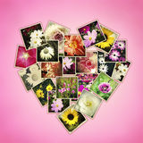 Flowers heart. Photos of flowers in shape of heart on pink background Royalty Free Stock Image