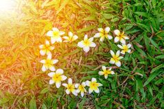 Flowers heart shape on the green grass Royalty Free Stock Image