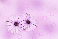 Flowers and Hearts. Two flowers made with hearts on bokeh a background of lilac color. .Valentine or Wedding Card Stock Photo