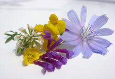 Flowers Royalty Free Stock Photos