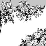 Flowers of hibiscus Stock Image