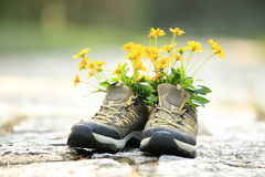 Flowers and hiking boots on trail stock images
