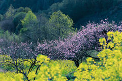 Flowers on the hillside, royalty free stock photos
