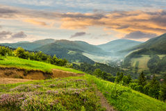 Flowers on hillside meadow with forest in morning mountain Stock Image